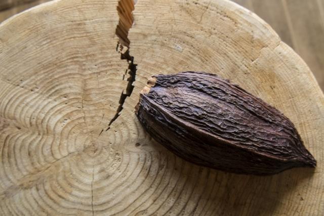 チョコレートの原料となるカカオ